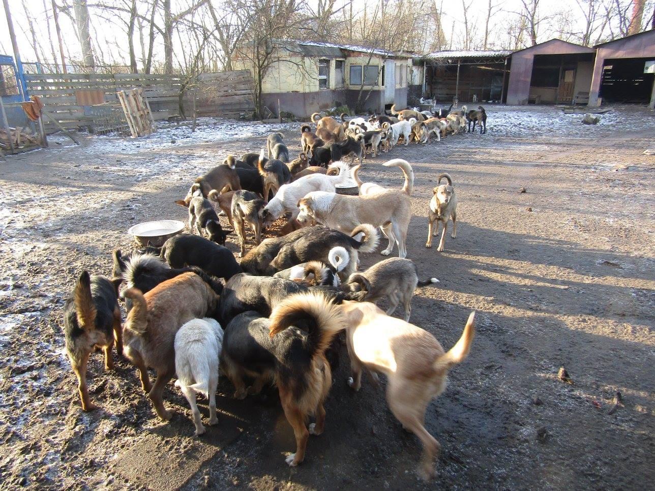 Україна в лідерах з кількості бездомних тварин : як це виправити