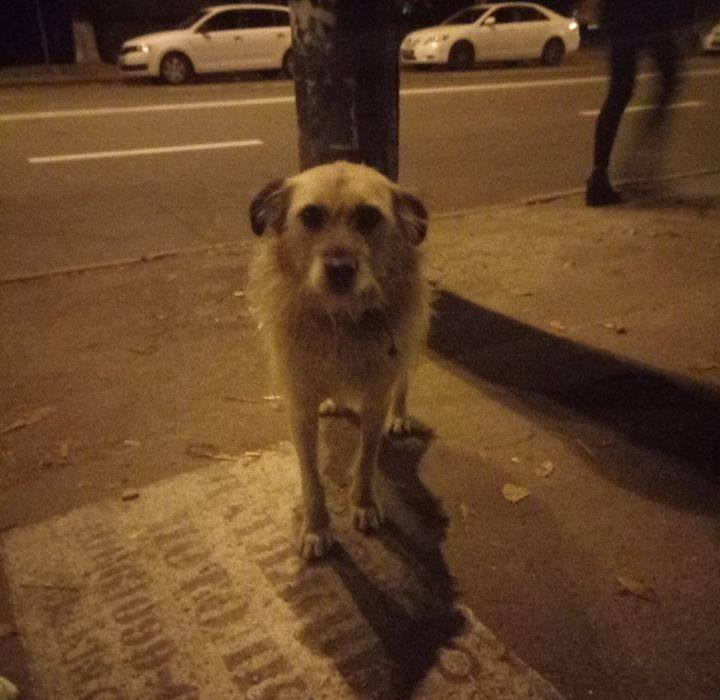 Чому в Україні так багато безпритульних тварин?